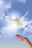 bird release image